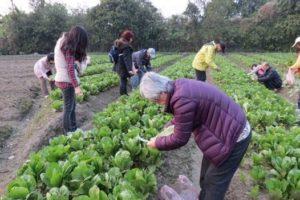 菜園體驗2