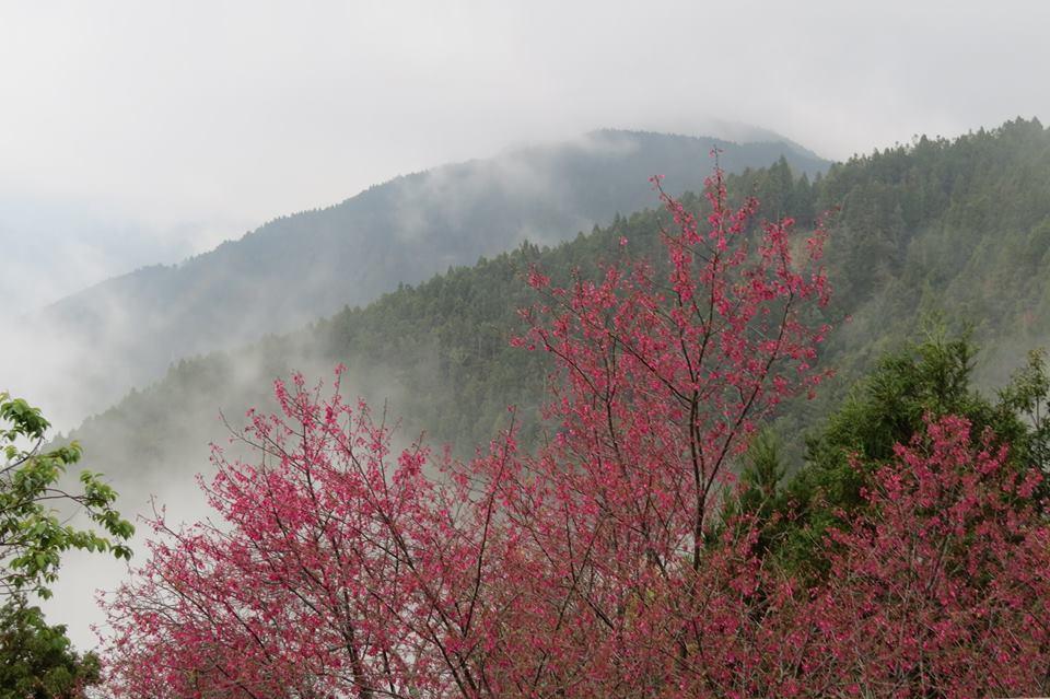 聖稜下的雲霧森林~觀霧森態小旅行