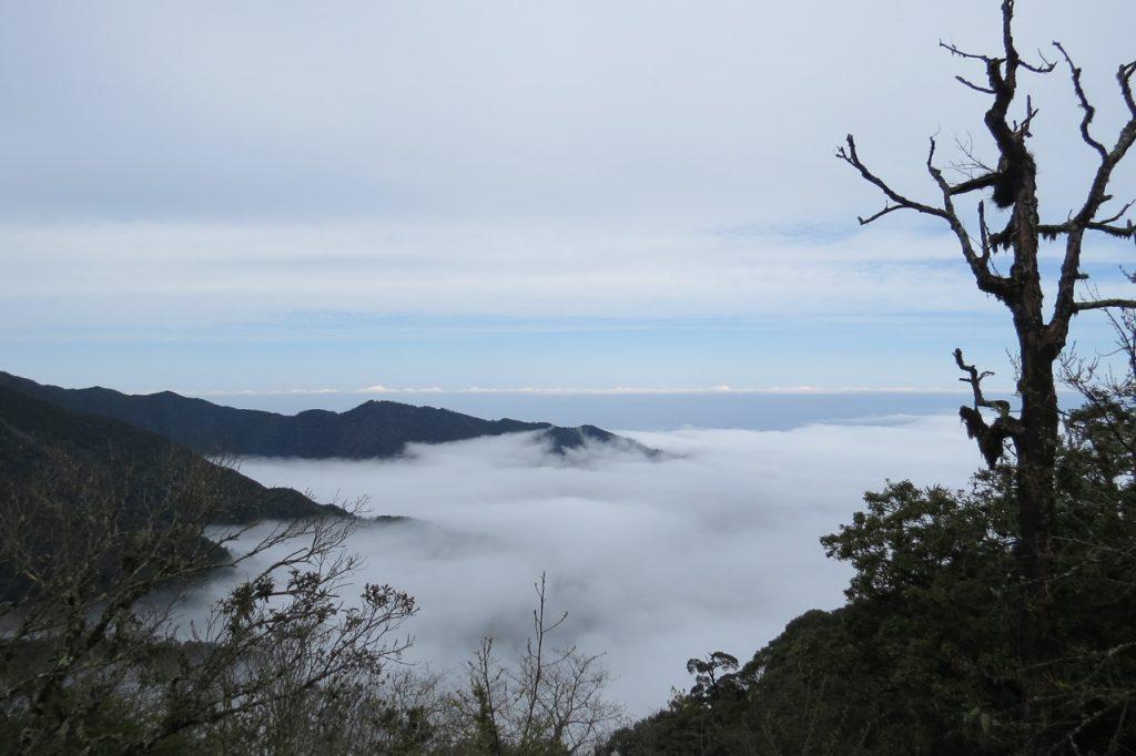 聖稜下的雲霧森林~觀霧雪霸森態之旅三日遊